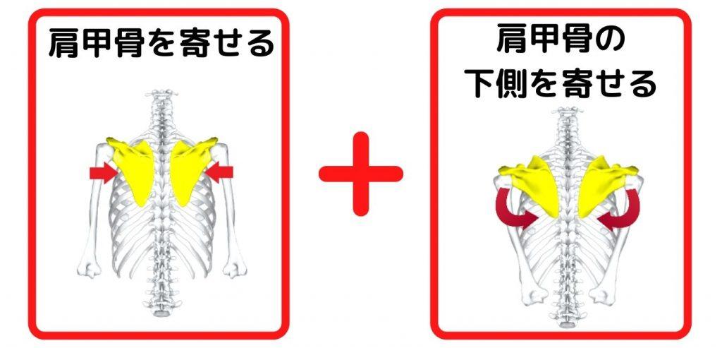 肩甲骨を寄せる動作
